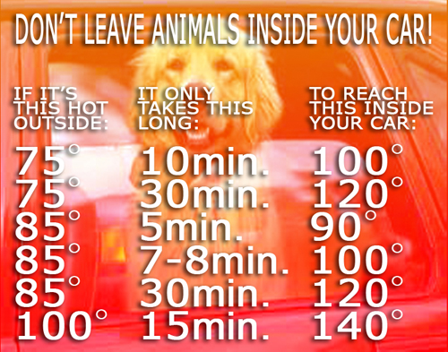 CHART FOR TEMP IN CAR FOR DOG