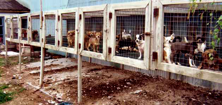 Lucerne Valley Puppy Mill Crisis Coachella Valley Weekly