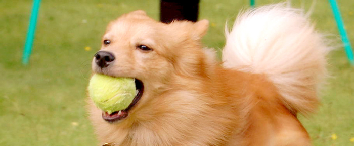 fp_dog-with-ball